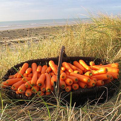 Légumes Tirel